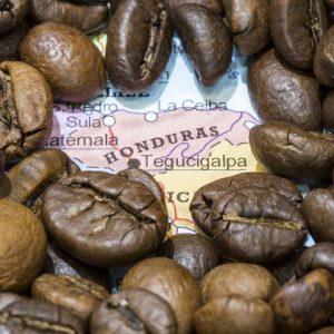 Wholesale roasted coffee