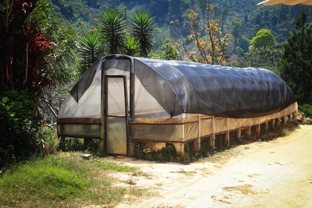solar drying coffee